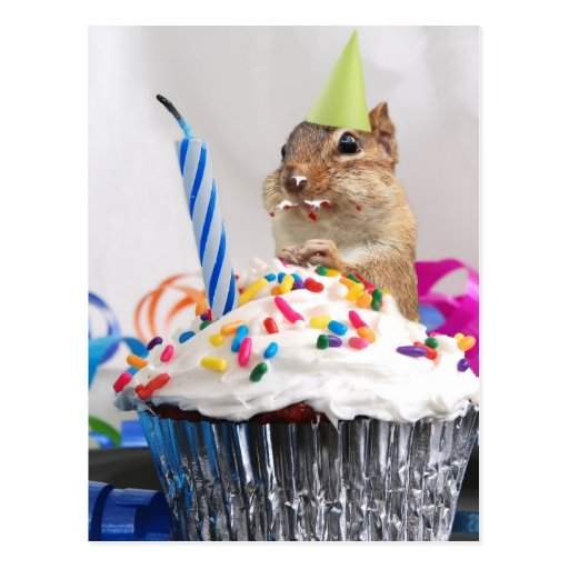 chipmunk birthday celebration postcards