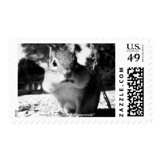 Chipmunk Black&White - Postage Stamps (horizontal)