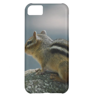 Chipmunk iPhone 5C Covers