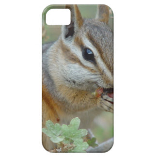 Chipmunk iPhone 5/5S Cover