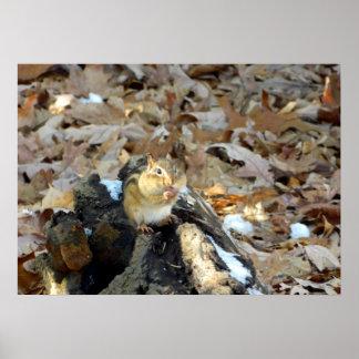 Chipmunk Cheeks Nature Poster