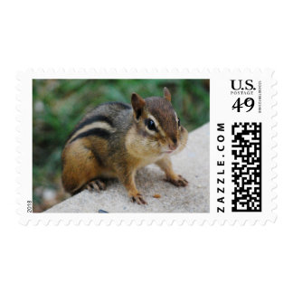 Chipmunk Cheeks Stamp