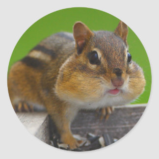 chipmunk classic round sticker