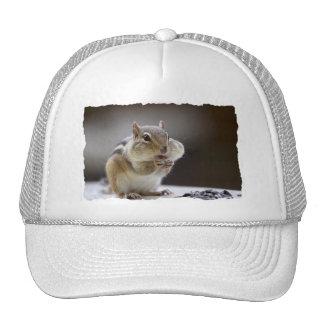 Chipmunk con la foto llena de las mejillas gorras