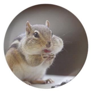 Chipmunk con la foto llena de las mejillas platos