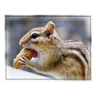 Chipmunk con un cacahuete tarjetas postales