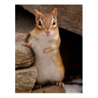 Chipmunk curioso tan lindo postales