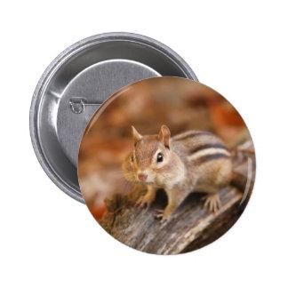Chipmunk de la cosecha pin redondo 5 cm