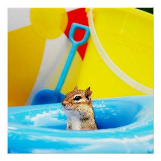 Chipmunk de la diversión del verano