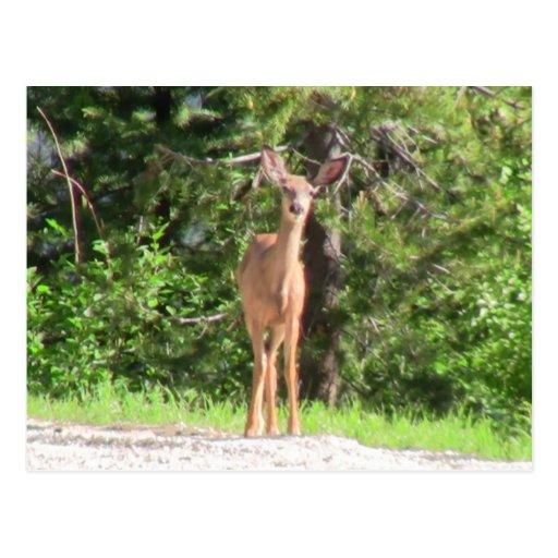 Chipmunk de los animales de los ciervos de los tarjetas postales