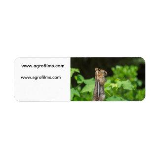 Chipmunk de rogación etiqueta de remite