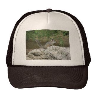 Chipmunk del acantilado gorras de camionero