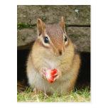 chipmunk del bebé con la fresa postales