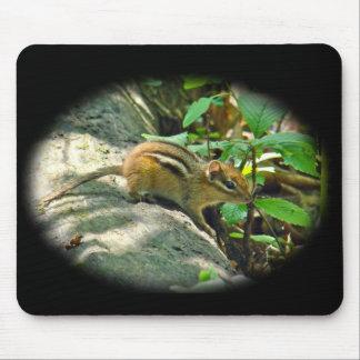 Chipmunk del este en tocón tapete de raton