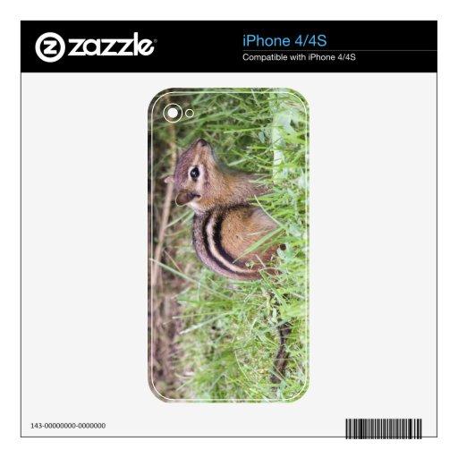 Chipmunk del este iPhone 4 skin