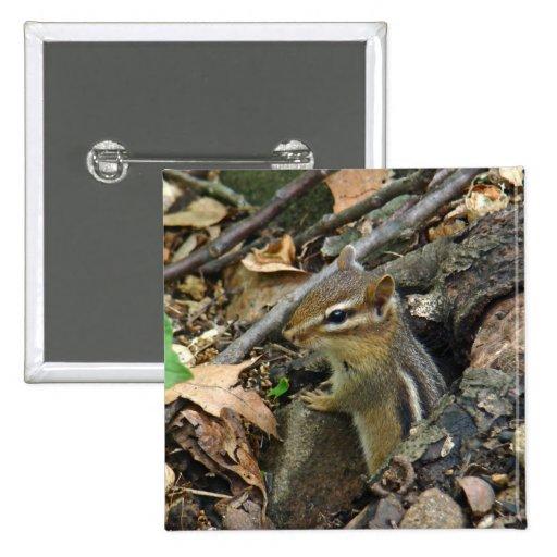 Chipmunk del este - striatus del Tamias Pins