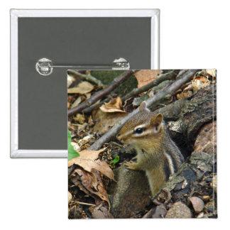 Chipmunk del este - striatus del Tamias Pin Cuadrado