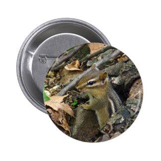 Chipmunk del este - striatus del Tamias Pin Redondo De 2 Pulgadas
