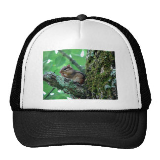 Chipmunk dulce en una ropa y regalos del árbol gorra