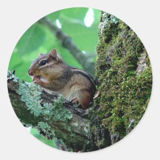 Chipmunk dulce en una ropa y regalos del árbol etiqueta redonda