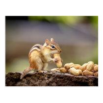 Chipmunk eating a peanut postcard