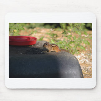 Chipmunk eating sunflower seeds mouse pad