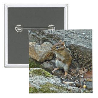 Chipmunk en artículos de la roca pin cuadrada 5 cm