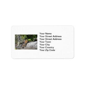 Chipmunk en el bosque etiquetas de dirección