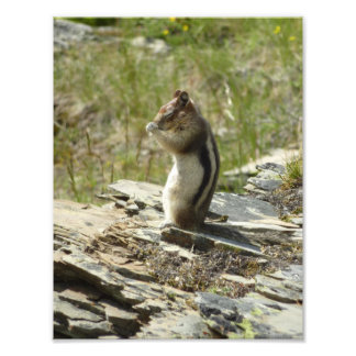 Chipmunk en foto de la naturaleza del Parque Fotografía