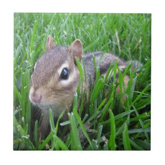 Chipmunk en la hierba tejas  cerámicas