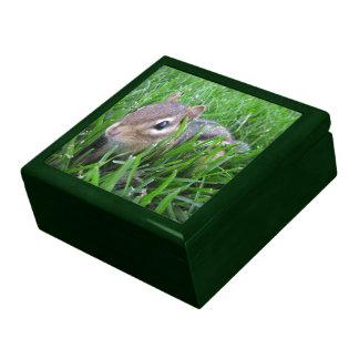 Chipmunk en la hierba cajas de joyas
