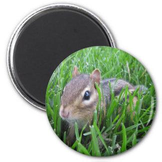 Chipmunk en la hierba imán para frigorifico