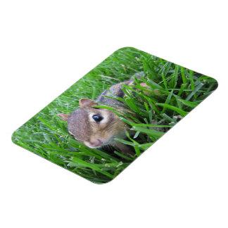 Chipmunk en la hierba iman rectangular