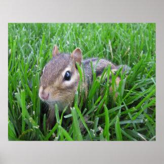 Chipmunk en la hierba posters