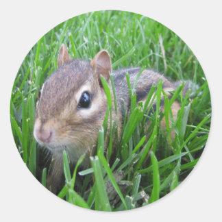 Chipmunk en la hierba etiquetas redondas