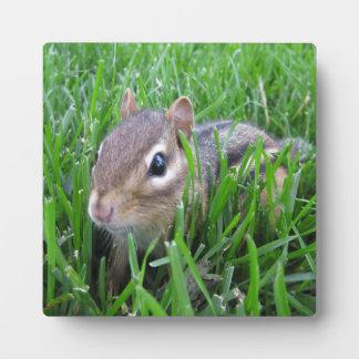 Chipmunk en la hierba placas