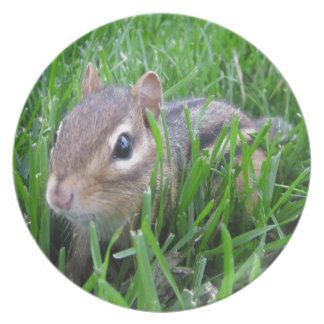 Chipmunk en la hierba platos