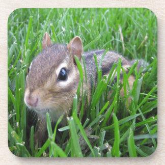 Chipmunk en la hierba posavaso
