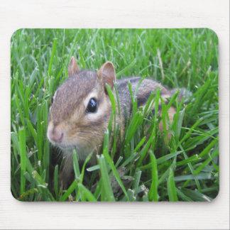 Chipmunk en la hierba tapetes de raton