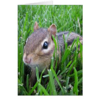 Chipmunk en la hierba felicitacion