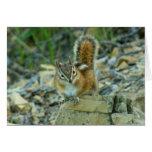 Chipmunk en la tarjeta del Parque Nacional Glacier