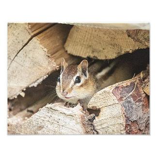 Chipmunk en una pila de madera cojinete