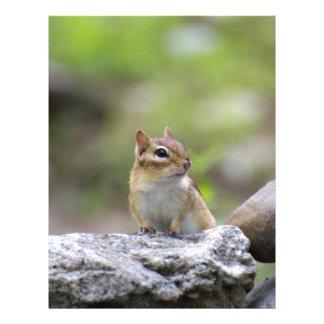 Chipmunk en una roca plantilla de membrete