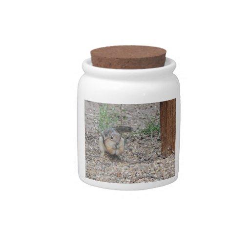 Chipmunk Feeding on Ground Candy Jar
