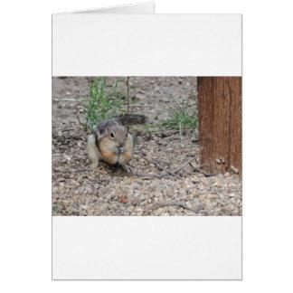 Chipmunk Feeding on Ground Card