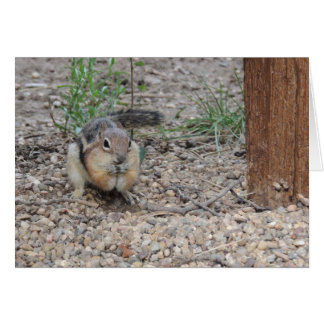 Chipmunk Feeding on Ground Card