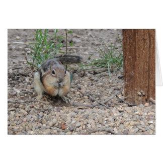 Chipmunk Feeding on Ground Greeting Card
