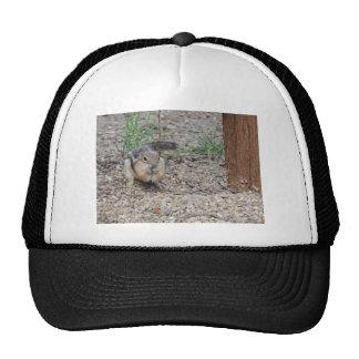 Chipmunk Feeding on Ground Trucker Hat