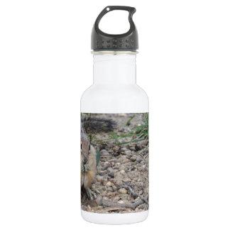 Chipmunk Feeding on Ground 18oz Water Bottle