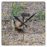 Chipmunk Feeding on Ground Square Wall Clock
